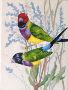 CARD NO 27 THE GOULDIAN FINCH